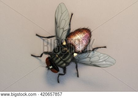 Artistic 3d Illustration Rendering Of A Housefly