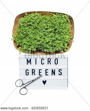 Microgreens Isolated On White. Micro Greens For Sale. Vitamins From Nature. Vegan And Healthy Superf