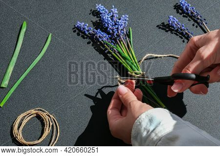 Female Hands Collect Bouquet Of Blue Muscari As A Gift. Pruning Flowers. Florist In Flower Shop. Eco