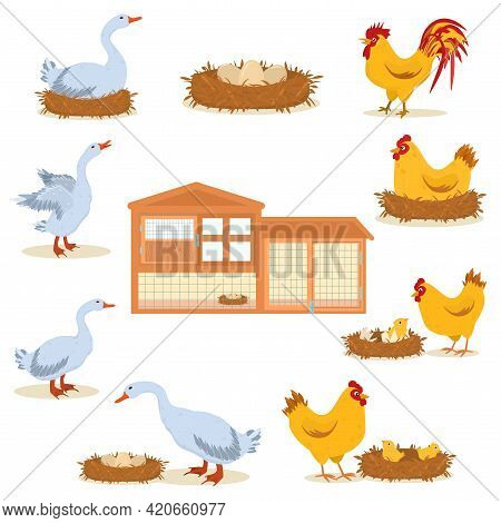 Vector Illustration On The Topic Of Breeding Poultry On A Farm.a Set Of Illustrations With Chickens,