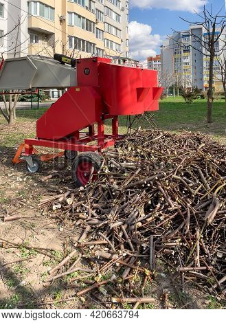 Close-up Of Tree Branches After Being Chopped In A Crushing Machine.