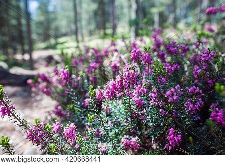 Purple flower nature background. purple flowers nature garden. Flowers nature background. Nature background for design. Spring nature background. Beautiful nature background. Colorful nature background Nature wildflowers. Nature for design. Spring nature.