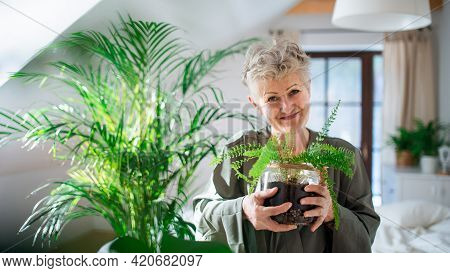Happy Senior Woman Looking After Potted Plants At Home, Looking At Camera.