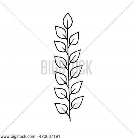 Plant Twig With Leaves Hand Drawn Doodle Outline. Frame Border Black Design Element. Greeting Card I