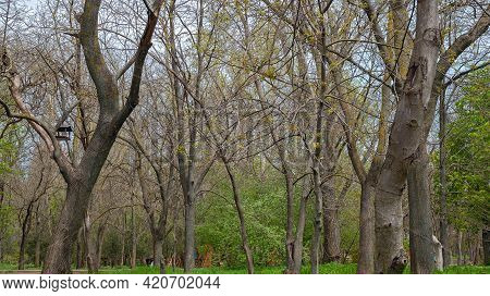 Young, Emerging Shoots Symbolize The Arrival Of Spring. The Trees Are Gradually Leafing. A Bird Feed