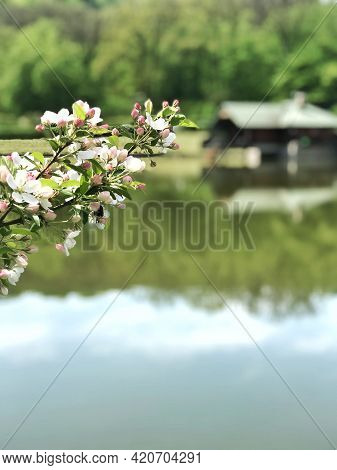 A Branch Of A Blossoming Tree On A Beautiful Background Of A Forest Lake And A House On The Water, O