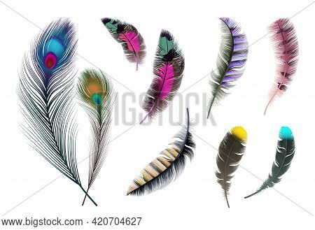 Bright Feathers. Neon Color Decorative Feather, Peacock Accessory. Realistic Flying Elements Isolate