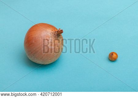 A Very Small And Very Large Onion On A Blue Background As A Symbol Of Difference, Choice, Growth.