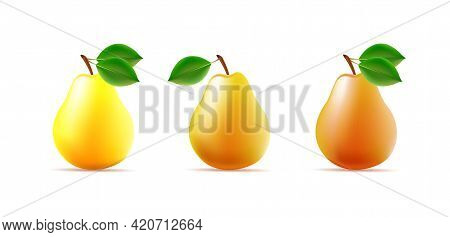Set Os 3d Pear Illustration, Different Color With Leaves, Whole Fruit Glossy Vector
