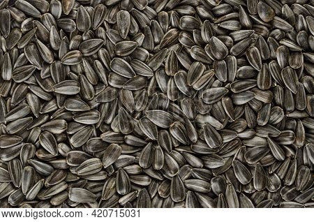 Sunflower Seeds, Background, From Above. Whole, Raw And Striped Fruits Of Helianthus Annuus With Hul