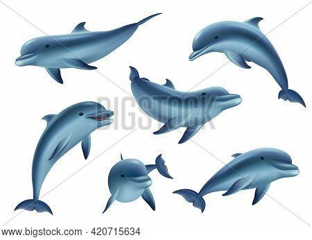Swim Dolphins. Aquarium Or Ocean Underwater Marine Animals Big Funny And Kind Fishes Decent Vector 3