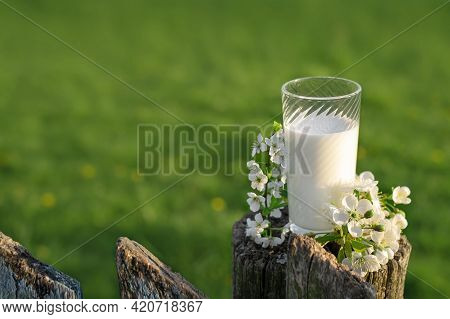 A Glass Of Fresh Cow's Milk Sits On An Old Fence Next To A Branch Of Cherry Blossoms. . World Milk D