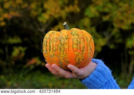 Autumn Harvest .thanksgiving Day And Halloween Symbol. Pumpkin In The Hands Of A Child In A Blue Swe