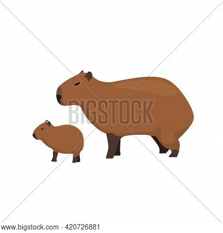 Capybara Family Animal Flat Vector Illustration On A White Background. Animals Of South America