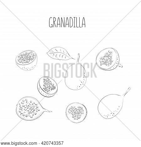 Vector Set Of Passion Fruit, Passionfruit. Hand Drawn Stylized Granadilla. Vector Illustration, Isol