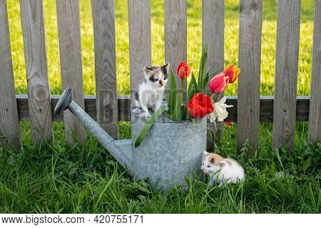 A Cute Little Kitten Is Sitting On A Watering Can With Flowers, And Another Kitten Is Waiting For Hi
