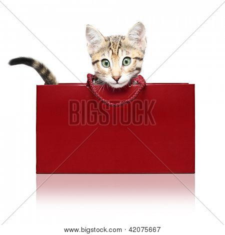 Cute kitten in a red shopping bag on a white background
