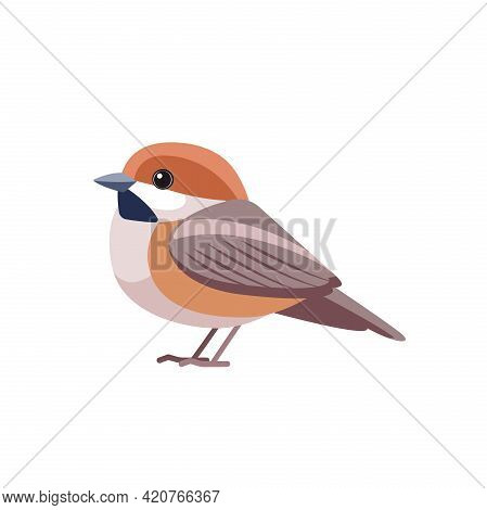 Chestnut-backed Chickadee, Poecile Rufescens . Sparrow Bird Cartoon Flat Style Beautiful Character O