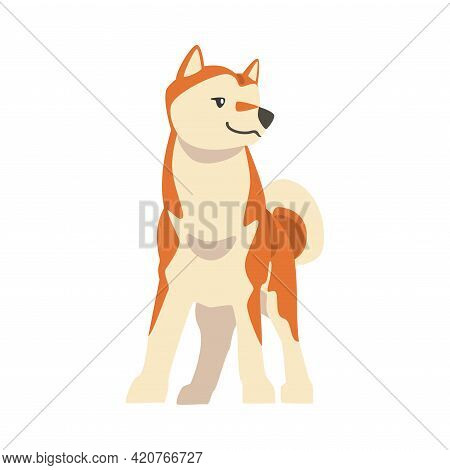 Shiba Inu As Japanese Breed Of Hunting Dog With Prick Ears And Curled Tail In Standing Pose Vector I