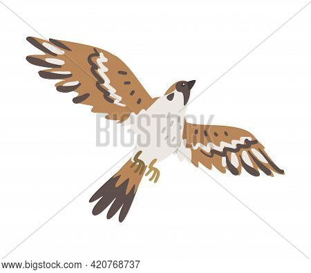 Sparrow As Brown And Grey Small Passerine Bird With Short Tail With Spread Wings Flying Vector Illus