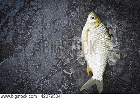 Fresh Fish Top View, Silver Barb Fish On Ice,  Java Barb Carp Fish On Market Food On Dark Background
