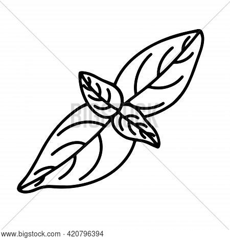 Basil Leaves Vector Icon. Isolated Illustration Of Condiment On A White Background. Black Outline Of