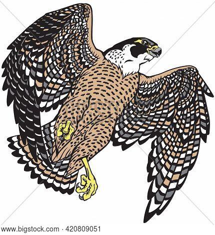 Falcon A Hunter In Flight. Flying Bird Of Prey. Falconry. Isolated Vector Illustration