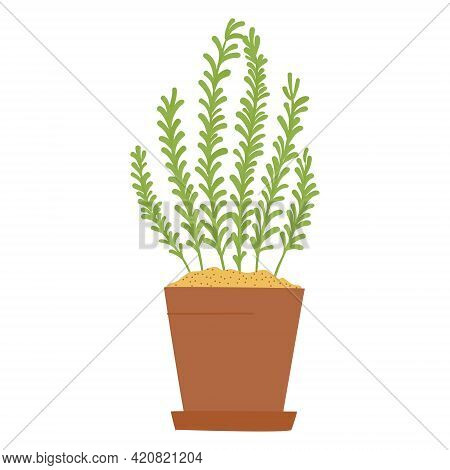 Drawing Of Rosemary Herb In Clay Pot