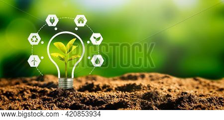 Sustainable Energy Sources Concept With Light Bulb And Plant