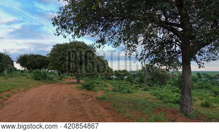 There Are Tire Tracks On The Dirt Road. Trees And Bushes Grow On The Roadside. There Are Pink And Bl