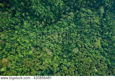 Topview The Treetops Abstract Background The Rain Forest And Jungle.