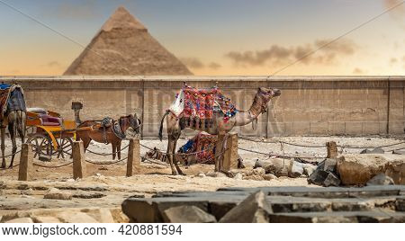 Camel On The Background Of Great Pyramid Of Giza. Colorful, Exotic Landscape With A Pyramid And A Ca