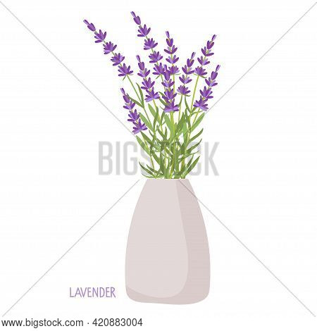 Lavender Bouquet In Vase. Lavender Plant Isolated. Vector Flat Grass Lavender. Beautiful Bouquet Of