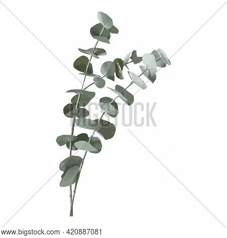 Eucalyptus Silver Dollar Tree Leaves Natural Branches With Green Leaves Tropical Pattern, Watercolor