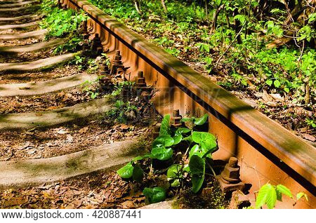 Close-up View Of Old And Rusty Rail In Spring Forest. Old Railway In The Forest. Famous Tunnel Of Lo