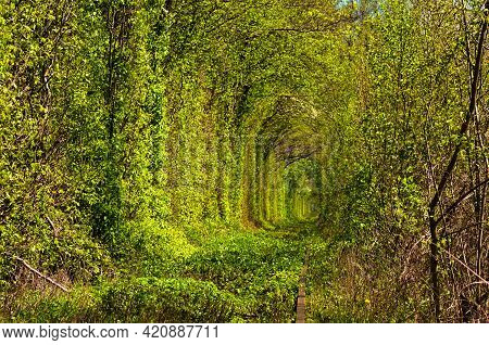 Astonishing Nature Landscape Of Spring Forest With Old Railway. Famous Tunnel Of Love In Klevan. Fam