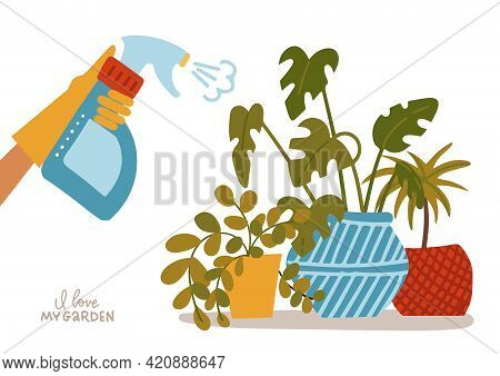 Hand Spraying House Plants In Pots. Water Pulverizer Symbol With Home Flower. Hand Holds Spray Bottl