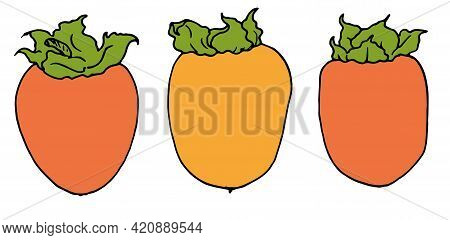 Beautiful Persimmon Color Sketch, Great Design For Any Purposes.vector Set Of Sweet Orange Persimmon