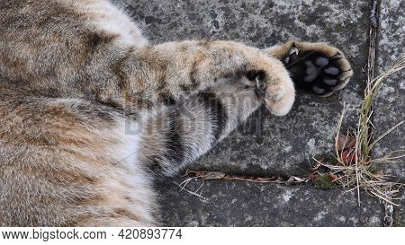 Fluffy Young Tabby Cat Paws Close-up At Grunge Stone Background Outdoor. Cute Cat Paws With Toe Pads