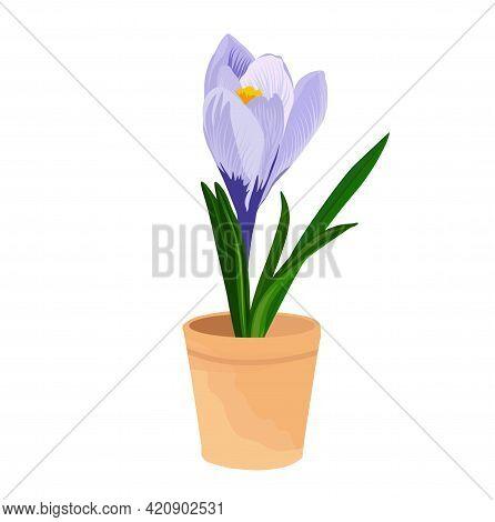 Saffron Flower Vector Stock Illustration. Purple Crocus In A Flower Pot. Spring Illustration. Nature
