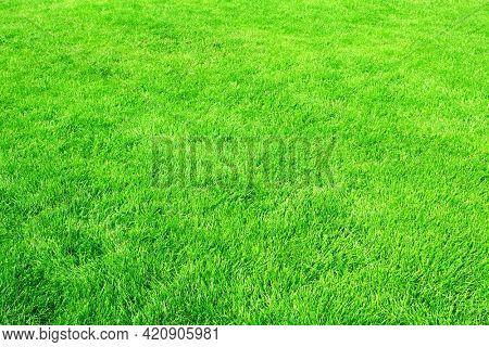Green grass on lawn. Stadium grass. Trimmed lawn grass