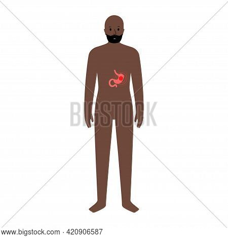Pain Or Inflammation In Stomach. Adult Black Man Anatomy Poster. Ache In Male Human Body. Internal O