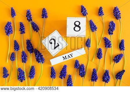 Calendar For May 28: Cubes With The Number 28, The Name Of The Month Of May In English, Scattered Fl