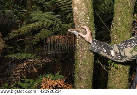 Person's Hand And Arm Reaching Out For Bracket Fungi Growing On Tree In New Zealand Bush.