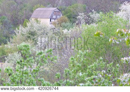 A House Around Trees That Blooming In White In Spring Time