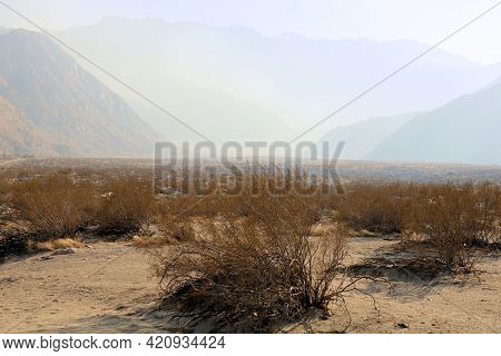 Creosote Shrubs On The Sandy Desert Floor With The Rugged San Jacinto Mountains Beyond Surrounded By