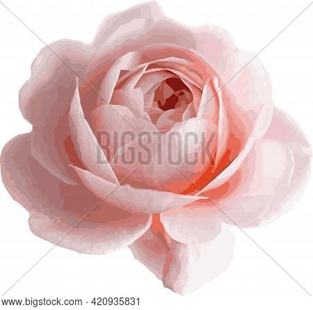 Ranunculus Is A Realistic, Floral Element. Peony Bud, Flowers For The Composition