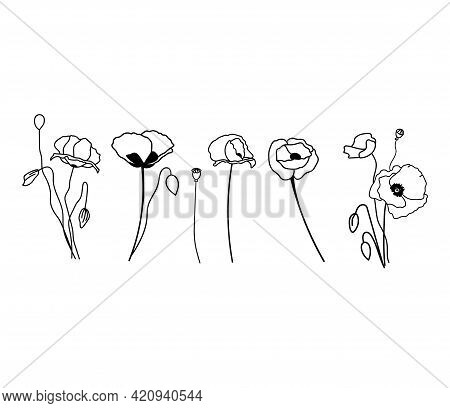 Wildflowers, Poppy, Collection Of Flowers. The Poppies Are Single And Bouquets. Isolated Vector Plan
