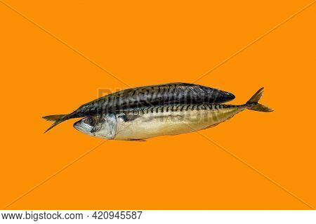 Flat, Eat, Protein, Nutrition, Delicious, Animal, Nature, Freshness, Tasty, Marine, Background, Cook