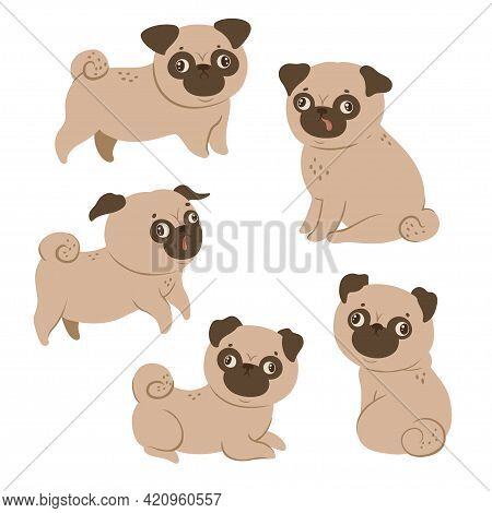 Set Of Cute Pugs Isolated On A White Background. Vector Image.
